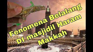 Video Ada Apa Dengan Fenomena Belalang Di Masjidil Haram Makkah? MP3, 3GP, MP4, WEBM, AVI, FLV Januari 2019