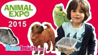 Video (VLOG) Animal Expo Chat Chien Poisson reptile 2015 - Démo Jouets MP3, 3GP, MP4, WEBM, AVI, FLV Juli 2017