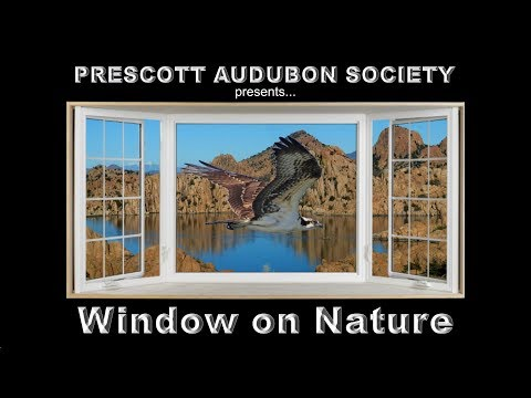 Window On Nature – January 25, 2018 – The White Mountains of Eastern Arizona – David Moll