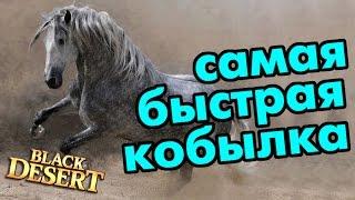 Black Desert (RU) - СУПЕР КОБЫЛА. Самый быстрый скакун в BDO!
