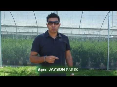 Documental Hidroponia Morovis Puerto Rico Preparacion de terreno