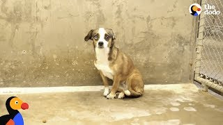 Video Scared Dog Never Wagged Her Tail Until She Met Her Foster Dad - BLOSSOM | The Dodo MP3, 3GP, MP4, WEBM, AVI, FLV Maret 2019