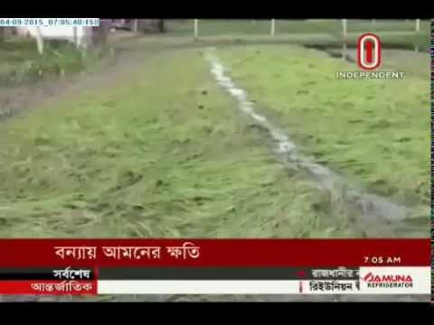 Flood damages aman paddy cultivated in 2.52 lakh acres of land (04-09-2015)