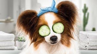 Video KUTYAPARÁDÉ (Show Dogs) - Magyar szinkronos előzetes (6) MP3, 3GP, MP4, WEBM, AVI, FLV Juni 2018