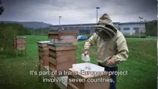 Preserving Bees