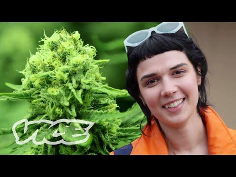 Smoking Doobies in Denver: Blunt Reviews