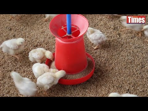 (Are you sick of chicken? : Antibiotics in poultry in Nepal - Duration: 2 minutes, 31 seconds.)