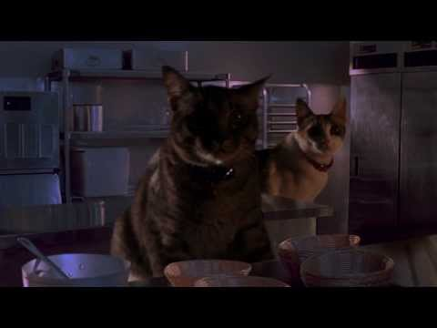 Jurassic Park Kitchen Raptor scene - WITH CATS!