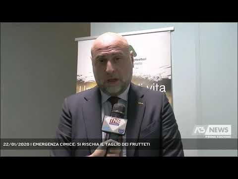 22/01/2020 | EMERGENZA CIMICE: SI RISCHIA IL TAGLIO DEI FRUTTETI