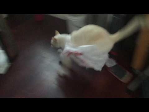 Cat regrets getting in the bag