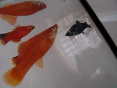 Peixinho nascendo