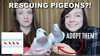 RESCUING BIRDS?! | Chicago Pigeon Pets Rescue by Maddie Smith