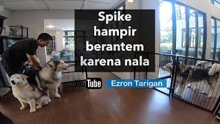Video SPIKE HAMPIR BERANTEM KARENA NALA - Ezron Tarigan & Humble Spiker MP3, 3GP, MP4, WEBM, AVI, FLV November 2018