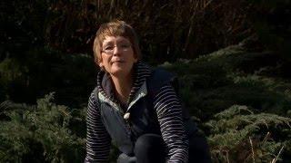 Lejtős kertek kialakítása - Kertbarátok - Kertészeti TV - műsor