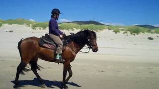 Miguel BTSF, 6 year old andalusian gelding, owned by Lizann Dunegan at Nehalem Beach June 2010.