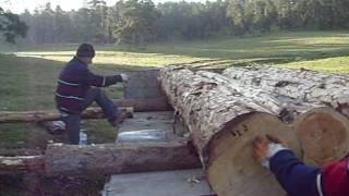dört (4) beş (5) metre uzunluktaki sarı çam ağacı parçaları traktörün römorkuna eğimli bir yamaçta iki sırık desteğiyle insan gücü ile yükleniyor.