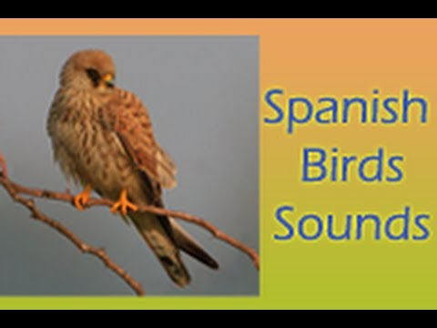 Video of Spanish Birds Sounds