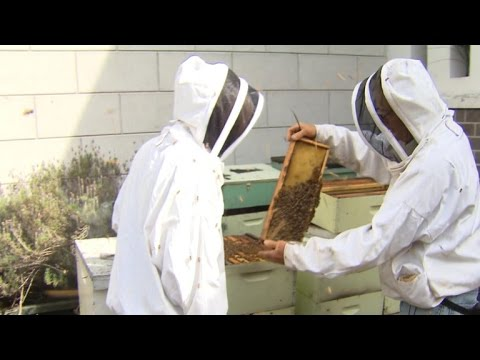 Your BEE HIVE will help save our healthy food~