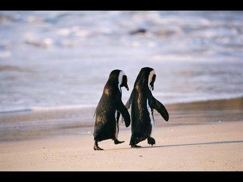 Самые верные пары среди животных