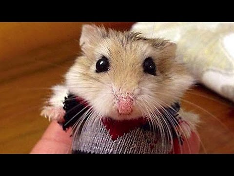 Hamster pictures