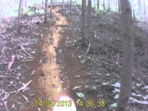 Desafio do eucalipto em Ibiraçu.