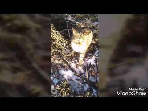 Говорящий котСмотреть всем)Приколы с котами смотреть