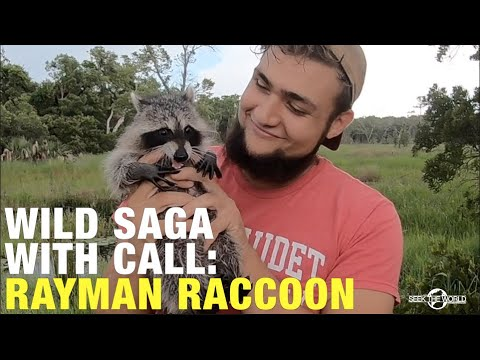 Animal Story: How Did Brandon Saved Rayman Raccoon's Life!?