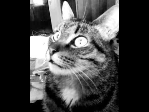 Кот осознал в чем смысл жизни - DomaVideo.Ru