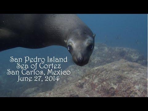 Sea Lions @ San Pedro Island, San Carlos, Mexico