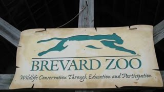 Melbourne (FL) United States  City new picture : Visit Brevard Zoo, Zoo in Melbourne, Florida, United States