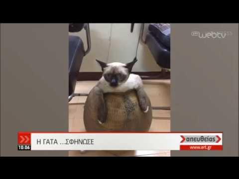 Γάτα σφήνωσε σε… πιθάρι! | 22/10/2019 | ΕΡΤ