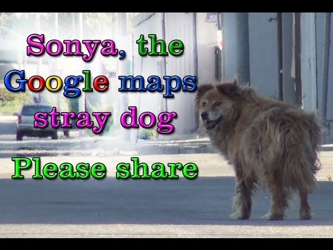 ABANDONED DOG SPOTTED ON GOOGLE MAPS IS RESCUED