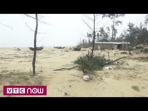 Tan hoang rừng phòng hộ ven biển Hà Tĩnh | VTC1 - Thời lượng: 87 giây.