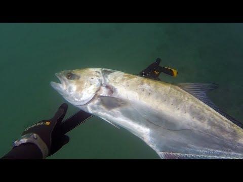 Pesca Sub: LECCIA DA SEDUTO [HD]