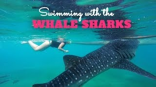 Oslob Philippines  City pictures : Snorkeling with Whale Sharks in Oslob Philippines [ GoPro Hero 3+ Black ]