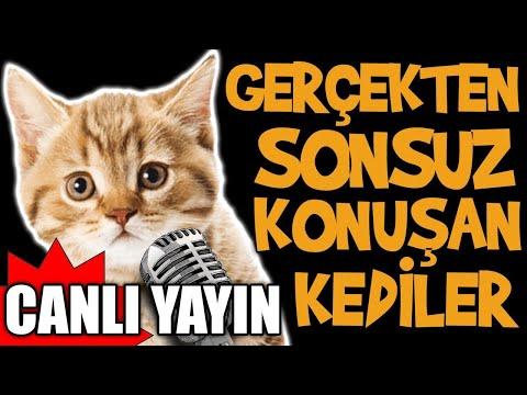 Gerçekten Sonsuz Konuşan Kediler Canlı Yayını - En Komik Kedi Videoları Canlı Yayın