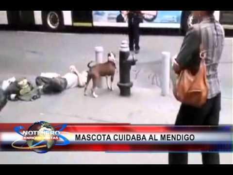 Policía de NY mata mascota que cuidaba a su amo