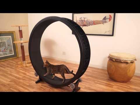貓咪專用滾輪跑步機,倉鼠表示:就說了很好玩吧!