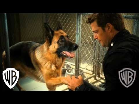 """Cats & Dogs: The Revenge of Kitty Galore 