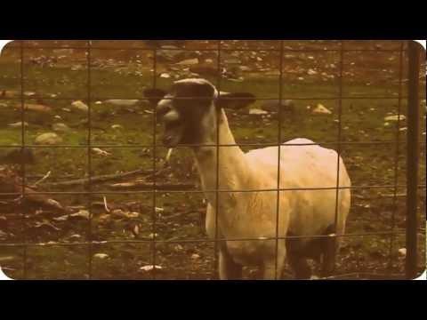 Video Emmure - Solar Flare Homicide(goat edition) download in MP3, 3GP, MP4, WEBM, AVI, FLV February 2017