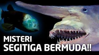 Video 4 SPESIES YANG HIDUP DI BAWAH SEGITIGA BERMUDA MP3, 3GP, MP4, WEBM, AVI, FLV Mei 2018
