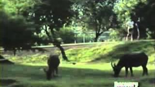 Documental - Nacidos Para Pelear. El Arte Del Muay Thay Spanish 4/5.flv