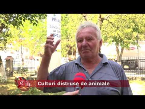 Emisiunea Proiecte pentru comunitate – 5 august 2016 – Lipănești