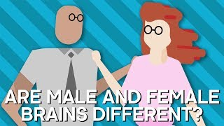 Our brain is the route of our consciousness, reasoning and personality but is there a difference between a male and female brain? Subscribe to Earth Lab for more fascinating science videos - http://bit.ly/SubscribeToEarthLab Around the world, humans are subject to cultural conditioning based on societal gender norms. Growing up with these norms does shape a persons behaviour, making it hard to align the differences with hard wired differences in the brain. To really take a closer look at this topic, scientists have started to look at the brain structure and the result are fascinating.  Watch more videos from Earth Lab:Earth Lab Originals http://bit.ly/EarthLabOriginalsBest Of BBC Earth Videos http://bit.ly/TheBestOfBBCEarthVideosThe Doctors Are In The House http://bit.ly/TheDoctorsAreInTheHouseBest Of Earth Unplugged Videos http://bit.ly/BestOfEarthUnpluggedVideosCheck out the other two channels in the BBC Earth network:BBC Earth: http://bit.ly/BBCEarthYouTubeChannelBBC Earth Unplugged: http://bit.ly/BBCEarthUnplugged About BBC Earth Lab:Welcome to BBC Earth Lab! Always wanted to know What the world's strongest material ? Why trains can't go uphill? Or How big our solar system really is? Well you've come to the right place.  Here at BBC Earth Lab we answer all your curious questions about science in the world around you (and further afield too). As well as our Earth Lab originals we'll also bring you the best science clips from the BBC archive including Forces of Nature with Brian Cox, James May's Things You Need To Know and plenty to keep the Docs away with Trust Me I'm A Doctor.And if there's a question you have that we haven't yet answered let us know in the comments on any of our videos and it could be answered by one of our Earth Lab experts.Subscribe for more: http://bit.ly/SubscribeToEarthLab You can also find the BBC Earth community on Facebook, Twitter and Instagram.Want to share your views with the team behind BBC Earth and win prizes? Join our fan panel here: https://tinyurl.com/YouTube-BBCEarth-FanPanelThis is a channel from BBC Worldwide who help fund new BBC programmes.