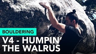 Humpin' the walrus at Tramway: Outdoor bouldering sloper smack action! by  rockentry