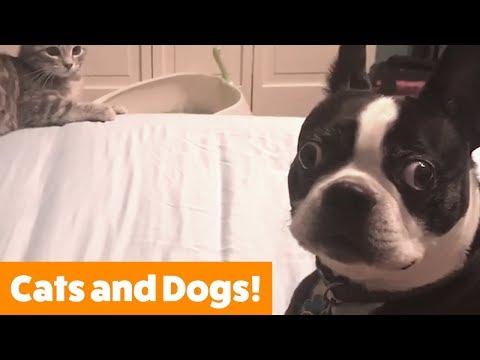 Funniest Pets & Animals of the Week | Funny Pet Videos - Thời lượng: 13 phút.