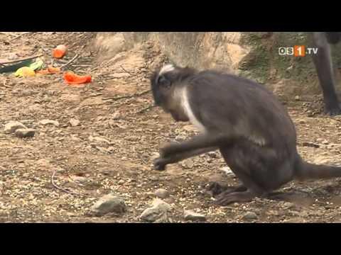 Osnabrück: Zoo Osnabrück - Geschichten aus dem Osna ...