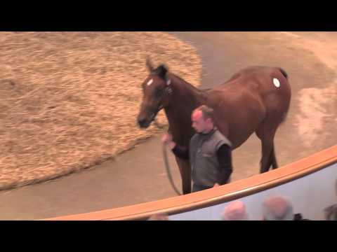 Lot 293 Galileo Filly ex Like A Dame Selling for 1m Guineas