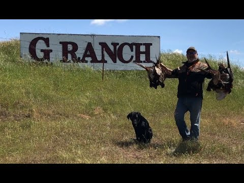 Pheasant Hunt at G-Ranch