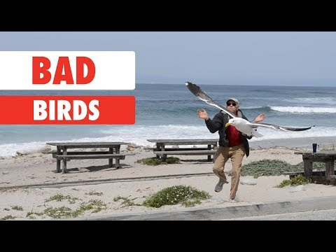 When Good Birds Go Bad...